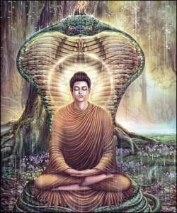 Elisir di lunga vita elogio della meditazione