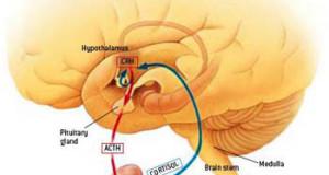 cortisolo ormone stress