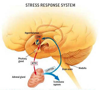 cortisolo stress