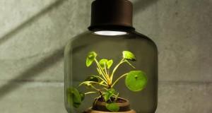 PLANTLAMP – LA PIANTA CHE CRESCE IN UNA LAMPADA E SENZA ACQUA