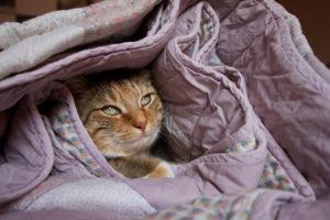 domestic cat lavori più strani del mondo the bed