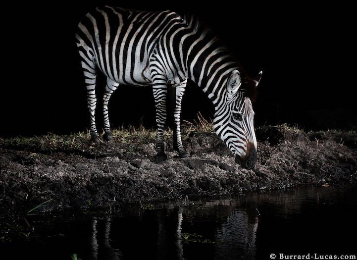 AFRICA - FOTO NOTTURNE DI ANIMALI IMMERSI NEL CIELO STELLATO